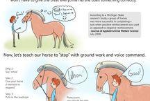 Equestrian / Horse stuff