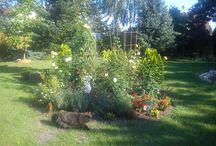 2014 Suburban Garden