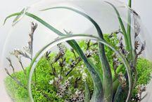 Terrariums succulents
