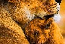 Животные. СЕМЬЯ