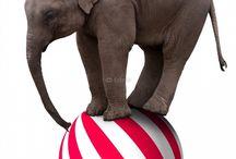 Elephant Posters / elephant posters, elephant prints, elephant t-shirts, elephant mousepads