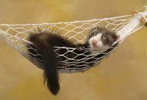 Tapety - zwierzęta - łasice