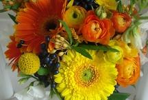 {Citrus Weddings}