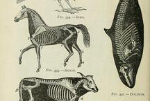 Animal-Reference