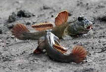 Fish Facts / Discover amazing facts about fish.