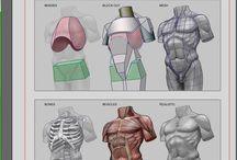 Anatomy Drawings 1