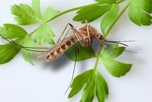 Boj s komáry