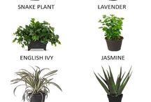 plants & stuff