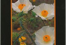MNMP's Medicinal Plants & Gardens Collection