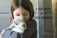 :: Best of the Faulk Farmstead