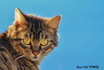 Kediler (Cats) / Çekimler bana aittir...