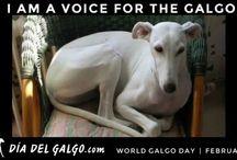 Eläinsuojelua, stop animal cruelty