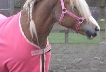 Gek op paarden én korting! / Korting, aanbiedingen, gratis - voor iedere paardenliefhebber is er hier wel iets wils!