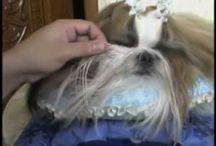 Dog groomong / Shu Tzu