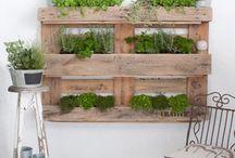 Vertical Gardens, Plants