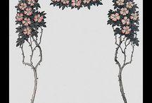 Frames ~ Borders ~ Shells
