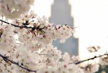 Lovely Japan