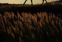 Golden Hour / by Portrait ou Paysage