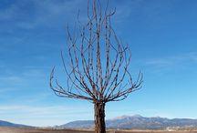 hole skelety stromov