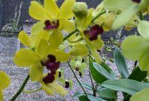 Cuidados com orquídeas