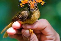And God created....the bird!
