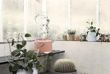 Home Inspirations - Botanique