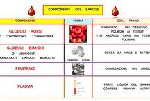classe 5 scienze