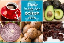 Pet Toxicity Center / Great information to keep your pet safe from toxins