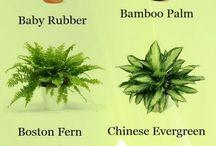plant indoor idea