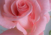 Virág - Flower / Aki a virágot szereti rossz ember nem lehet :)