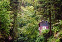 дома,лес,природа
