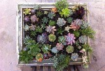 gardening ideas / by Christine Young