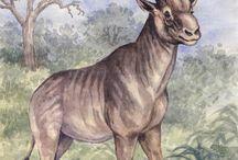 Eski hayvanlar