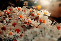 Çiçeklerle Geleceğim Sana