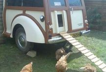 Chicks / Chickens and coops / by JM