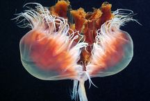 Marine Life Images