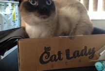 CatLadyBox Reviews / A purrfect collection of cat ladies and their kitties enjoying their CatLadyBox subscriptions! We love hearing from everyone!