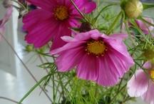 Цвет цвет