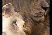 lions / by Mary Bramos
