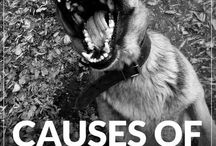 Everything Dog - Aggression