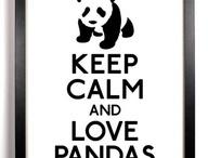 Cute - Panda