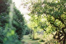 Garden & Green