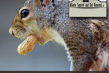 Squirrel And Rat Removal / by Atlanta Squirrel & Rat Removal