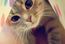 pretty cute animals / by Yui McDanger