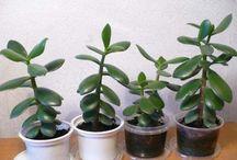 rostliny-bylinky