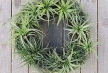 DIY Wreaths  / 'Tis the season to experiment with wreaths!