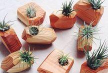 piante grasse e legno