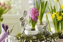 Easter & Spring Decor / by Susan Dryden
