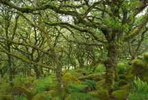 European Forests and Fauna / Inspiration in the form of European forest photographs.