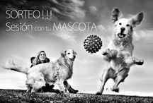 Sesiones Mascotas / Sesiones fotográficas dueños y mascotas